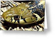 Checkered Garter Snakes Head Greeting Card