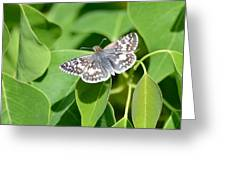 Checkered Skipper Greeting Card