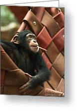 Cheeky Chimp Greeting Card