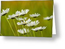 Cheerful Daisy Wildflowers Blowing In The Wind Greeting Card