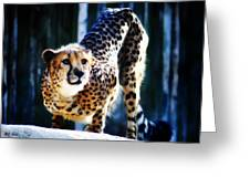 Cheeta Greeting Card