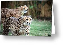 Cheetah Brothers Greeting Card