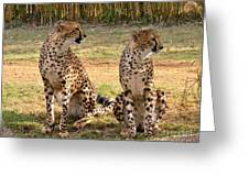 Cheetah Chat 1 Greeting Card