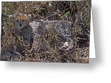 Cheetah Kitten Greeting Card