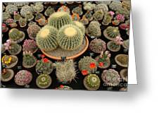 Chelsea Flower Show Cacti Display Greeting Card