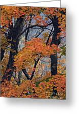 Cherohala Maple - D007676 Greeting Card