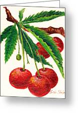 Cherries On A Branch Greeting Card