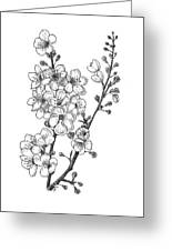 Cherry Blossems Greeting Card by Christy Beckwith