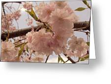 Cherry Blossom 2 Greeting Card