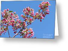 Cherry Blossom Branch Greeting Card