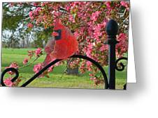 Cherry Blossom Cardinal  Greeting Card
