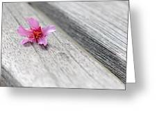 Cherry Blossom On Bench Greeting Card