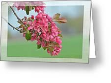 Cherry Blossom Spring Photoart Greeting Card