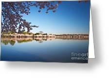 Cherry Blossoms Along The Tidal Basin Greeting Card