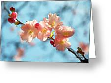Cherry Blossoms IIi Greeting Card