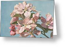 Cherry Blossoms Greeting Card by Kim Hojnacki