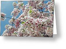 Cherry Blossoms Of The Sky Greeting Card