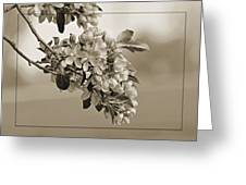 Cherry Blossoms Sepia Greeting Card