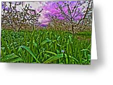 Cherry Orchard After The Storm Greeting Card