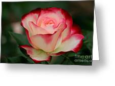 Cherry Parfait Greeting Card