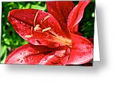 Cherry Red Lily Greeting Card