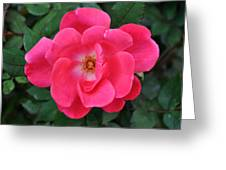Cherry Red Rose Greeting Card