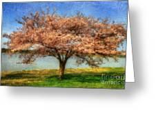 Cherry Tree Greeting Card