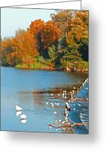 Chester In Autumn Greeting Card