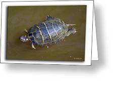 Chester River Turtle Greeting Card