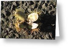 Chestnut Flower Greeting Card