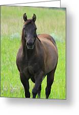 Chestnut Mare Greeting Card