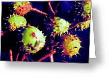 Chestnut Pods 1 Greeting Card
