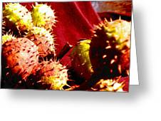 Chestnut Pods 2 Greeting Card