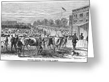 Chicago: Cattle Market Greeting Card
