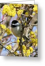 Chickadee Among The Blossoms Greeting Card