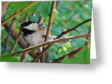 Chickadee Days Greeting Card