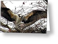 Chickahominy Osprey Greeting Card