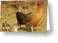 Chicken And Chicks Greeting Card