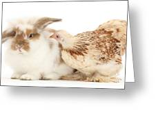 Chicken And Rabbit Greeting Card