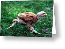 Chicken Little Greeting Card