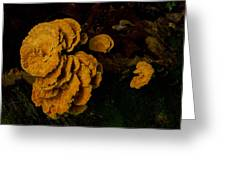 Chicken Of Woods 1 Greeting Card