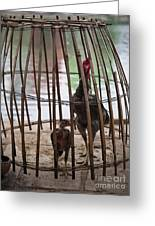 Chickens In Bamboo Cage Greeting Card