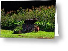 Chickens Of The Corn Greeting Card
