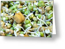 Chickpea And Other Lentils In The Form Of Healthy Eatable Sprouts Greeting Card