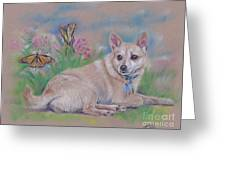 Chihuahua With Butterflies  Greeting Card