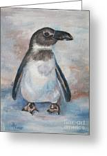 Chilly Little Penguin Greeting Card
