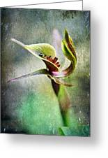 Chiloglottis Greeting Card by David Lade