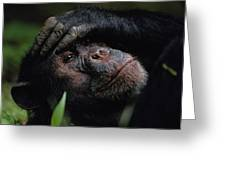 Chimpanzees, As Reported By Jane Greeting Card