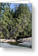China Creek China Beach Juan De Fuca Provincial Park Bc Canada Greeting Card by Andy Smy