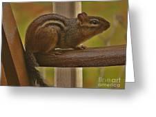 Chipmunk Chair Greeting Card